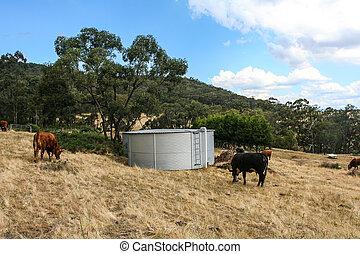 水タンク, paddock., 牛