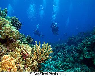 水下呼吸器潛水員, returng, 從, a, 跳水