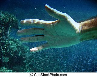 水下的 生活, ......的, 大堡礁