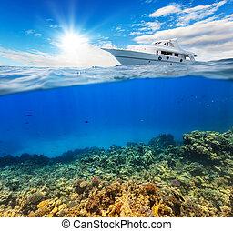 水下, 珊瑚礁, 由于, 地平線, 以及, 水表面