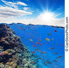 水下, 珊瑚礁, 由于, 地平線, 以及, 水, 波浪