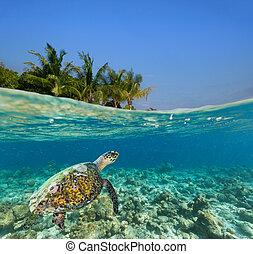 水下, 珊瑚礁, 由于, 熱帶的島