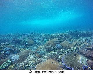 水下, 珊瑚礁, 背景, 在, bali