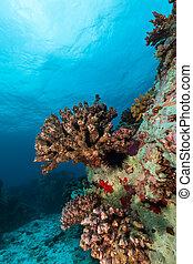 水下, 珊瑚礁, 背景