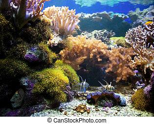 水下, 珊瑚, fish., life., 礁石