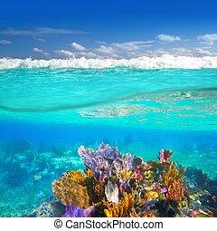 水下, 礁石, 里維埃拉, 珊瑚, mayan, 向上, 下來, 水線