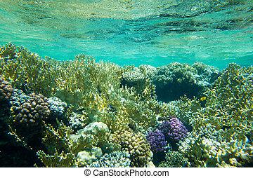 水下, 藍色的海洋, 背景, 在, 海