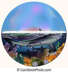 水中, サメ, イラスト, ベクトル, カード