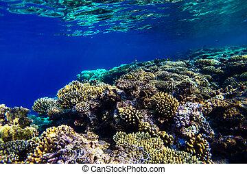 水中, サンゴ海, 砂洲, 赤
