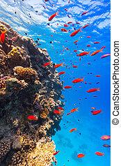 水中, サンゴ礁