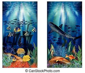 水中, トロピカル, 旗, ∥で∥, サメ, ベクトル, イラスト