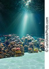 水中, 海底, ∥あるいは∥, 海, 海洋