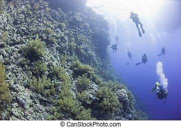 水中, 珊瑚, ダイバー, 砂洲, スキューバ