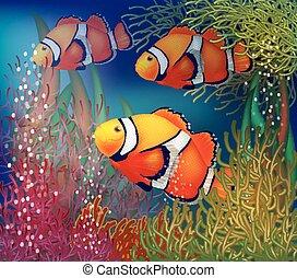 水中, clownfish, カード