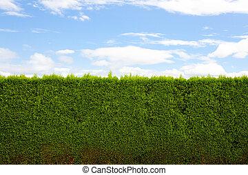 水平, 樹籬