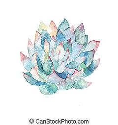 水彩画, みずみずしい, ペイントされた, succulent., 手, イラスト