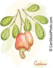水彩画, ナット, りんご, cashew., style.
