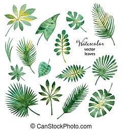 水彩画, 葉, セット, 緑