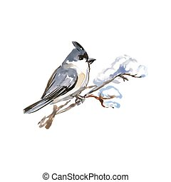 水彩画, 鳥