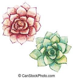 水彩画, succulents, すてきである