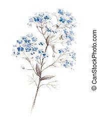 水彩, 藍色, forget-me-flower, 分支