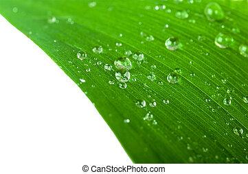 水滴, 上に, a, 緑の葉, クローズアップ