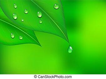 水滴, 葉, 背景