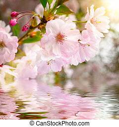水, さくらんぼ, 反射, 花