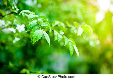 水, クローズアップ, 低下, 葉, 緑