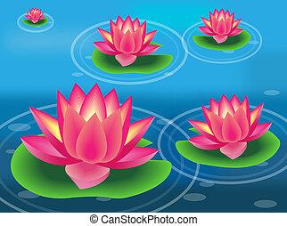 水, パッド, 花, ユリ