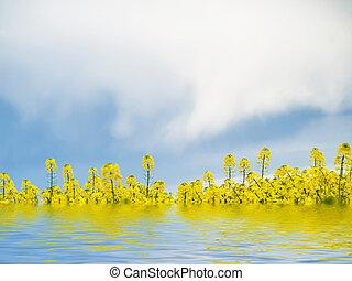 水, フィールド, 菜の花