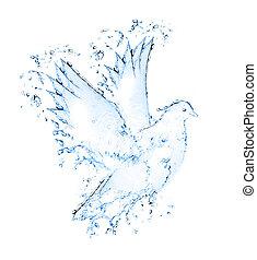 水, 作られた, 鳩, はねる, から