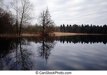 水, 反映された, 木