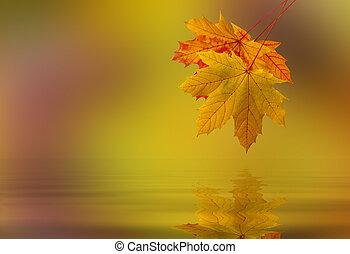 水, 叶子, 落下