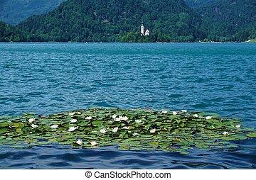 水, 島, 出血させる, 湖, lillys
