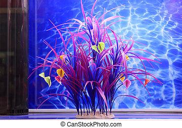 水, 新たに, 植物, 水族館
