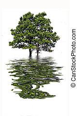 水, 木の反射