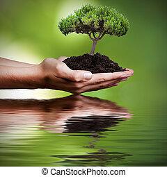 水, 木の反射, 手