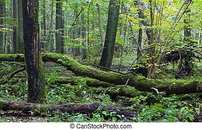 水, 木, 古い, オーク, 遅く, 森林, 秋