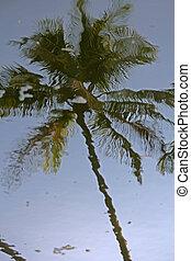 水, 椰子手掌, 反映树