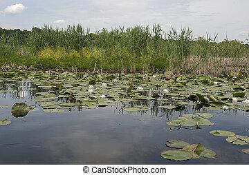 水, 池, lillys