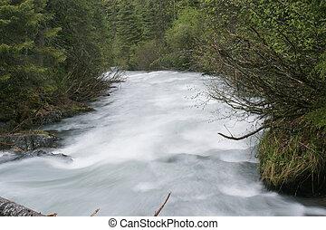 水, 流動, 在, 灌木