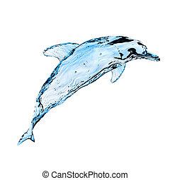 水, 海豚