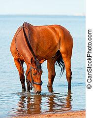 水, 湾, 飲むこと, 馬