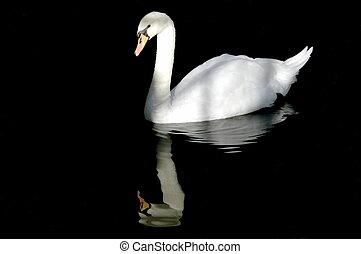 水, 白鳥