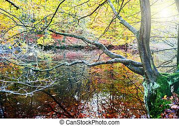 水, 秋, 反映, 木の景色