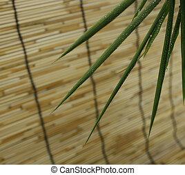 水, 竹, 低下, 葉
