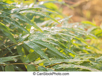 水, 竹, 緑は 去る