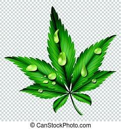 水, 緑, 低下, 葉