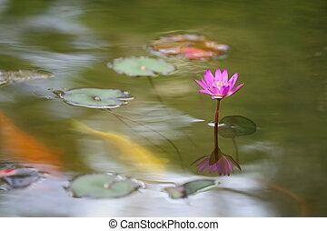 水, 花, ユリ